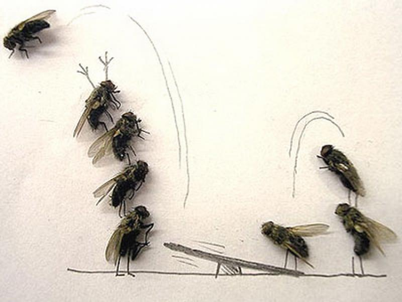 Roiul de muşte şi PSD, când miroase treaba mare (OPINII)