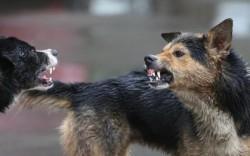 Copil de 9 ani din Arad, mutilat de un câine