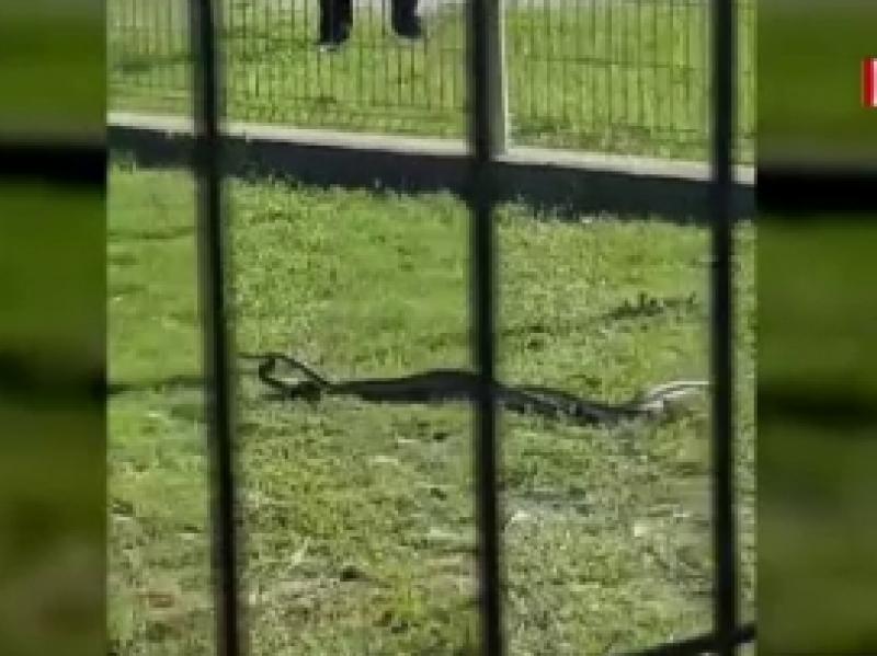 Copii îngroziți într-un loc de joacă. Șerpi de peste un metru i-au panicat și pe părinți