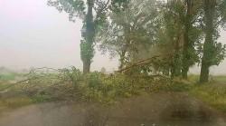 Un copac a căzut pe șosea pe DN 7 între Arad și Pecica