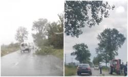 Furtuna face ravagii în județul Arad. Copaci căzuți, drumuri blocate