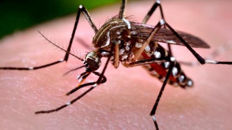Mare ATENȚIE ! Val de infecții transmise de țânțari