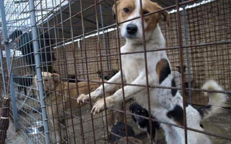 Târg de adopţie canină ediţia a II-a