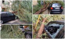 Copac căzut peste două maşini în Confecţii, ISU nu a intervenit