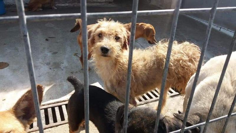 Al treilea Târg de adopţie canină are loc sâmbătă în Parcul Chinologic din Subcetate