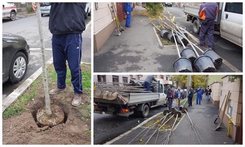 Municipalitatea promite că în locul fiecărui copac uscat din municipiu se vor planta alţi trei copaci