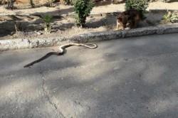 Un sat din sudul țării este invadat de șerpi. Oamenii sunt disperați