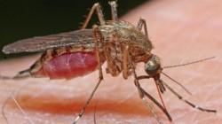 West Nile în România, 165 de cazuri de infecție și 17 decese