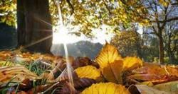 Meteorologii au anunțat cum va fi vremea pentru următoarele două săptămâni