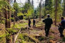 O femeie din Pecica data dispărută după ce a plecat la cules de ciuperci în pădure
