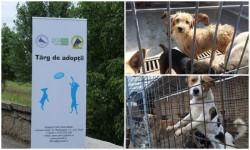 Iubitorii de câini sunt aşteptaţi sâmbătă la Târgul de adopţie Canină în Parcul Chinologic din Subcetate