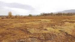 """""""Pădurea Centenarului"""" un proiect îndrăzneţ al unei primării din judeţul Arad în care se vor planta 1918 stejari"""