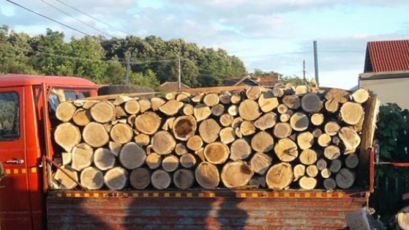 A luat o amendă de 3.000 de lei pentru transport ilegal de lemne