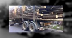 Bărbat din Felnac prins cu lemne fără a avea asupra lui documente