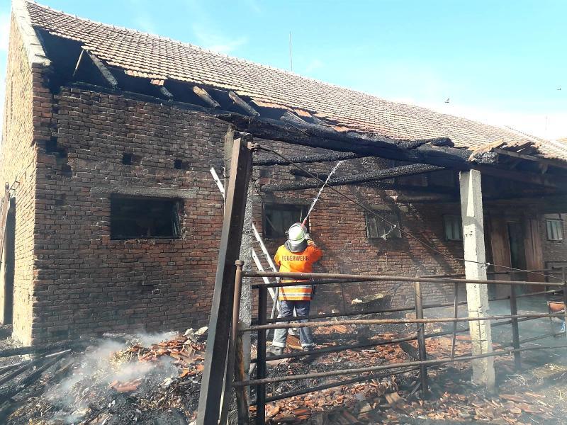 Pompierii au salvat de la incendiu, animalele unui adăpost din Sântana