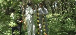 TRAGEDIE la Pecica ! Un tânăr de 19 ani a fost găsit spânzurat