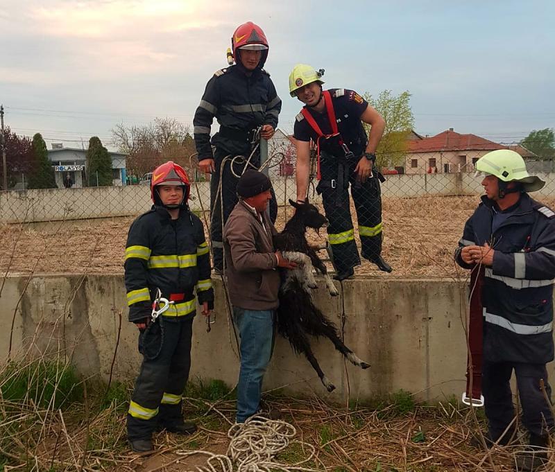 Pompierii arădeni nu stau nicio clipă ! Pentru ei orice viață contează