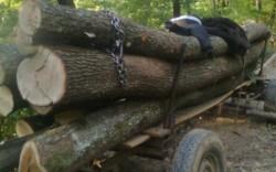 Un bărbat din Cuied a furat lemne în valoare totală de 3.039 lei