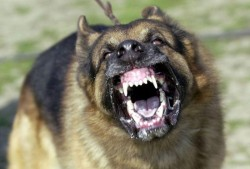Câinii agresivi, în atenţia poliţiştilor locali
