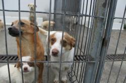 Ai adoptat un câine? Polițiștii locali vor efectua verificări ce vizează condițiile de viață a patrupedelor