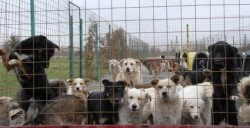 Tot mai mulţi căţei adoptaţi în Arad