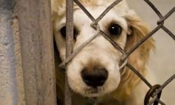 Adoptă un cățel la târgul de adopție canină - ediția a VI-a