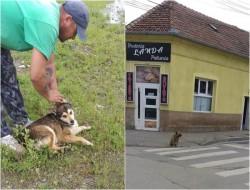 Mai mulţi câini vagabonzi au fost capturaţi de pe străzile municipiului