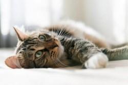 Deținătorii de pisici își vor putea steriliza animalul de companie în mod gratuit