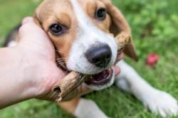 Târgul de adopție canină, ajuns la ediția VIII te invită să îți alegi un prieten pe viață