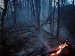 Romsilva face apel către populaţie pentru prevenirea incendiilor de pădure