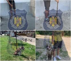 Noi măsuri împotriva nesiguranței cetățenilor din zonele Boul Roșu și Piața Catedralei