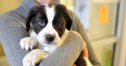 Vino să-ți alegi un prieten la Târgul de Adopție Canină din acest weekend