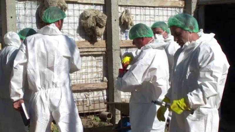 Măsuri pentru prevenirea pestei porcine africane. Ce interzic medicii veterinari din cadrul D.S.V.S.A. Arad