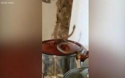 O femeie a rămas îngrozită în timp ce gătea în bucătărie