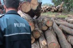 5.000 de lei amendă pentru un bărbat care transporta lemne în Gurahonț