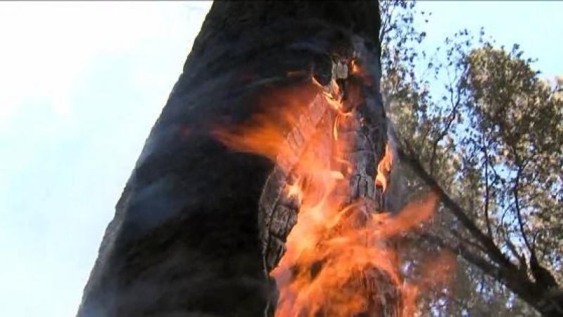 Un transformator a luat foc in Parcul Reconcilierii, vineri după-masa