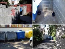 Primăria acționează împotriva șobolanilor după sesizarea primită pe aplicația My Arad