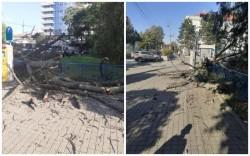 Atenţie! Nu cade doar tencuiala, cade şi copacul! A căzut fără să adie vântul şi era să producă o tragedie!