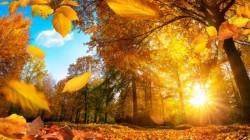 Prognoza meteo pentru miercuri, 16 octombrie: temperaturi neobișnuite