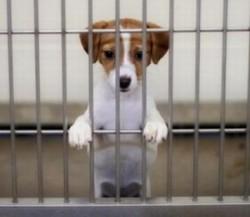 Haide să adopți un prieten pe viață la Târgul de Adopție canină