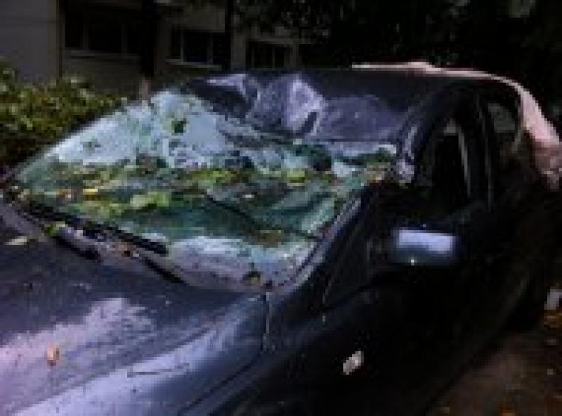 Un copac a căzut peste o mașină în centrul Aradului