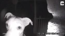 Acest VIDEO te va emoționa și nu îți va veni să crezi ce a făcut un câine în urmă cu câteva zile