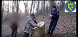 Trei bărbați din Vârfurile, cercetați pentru tăiere ilegală de arbori și furt de material lemnos