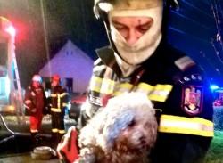 Claudiu  Bozsitz este pompierul arădean care a salvat un cățeluș din flăcări