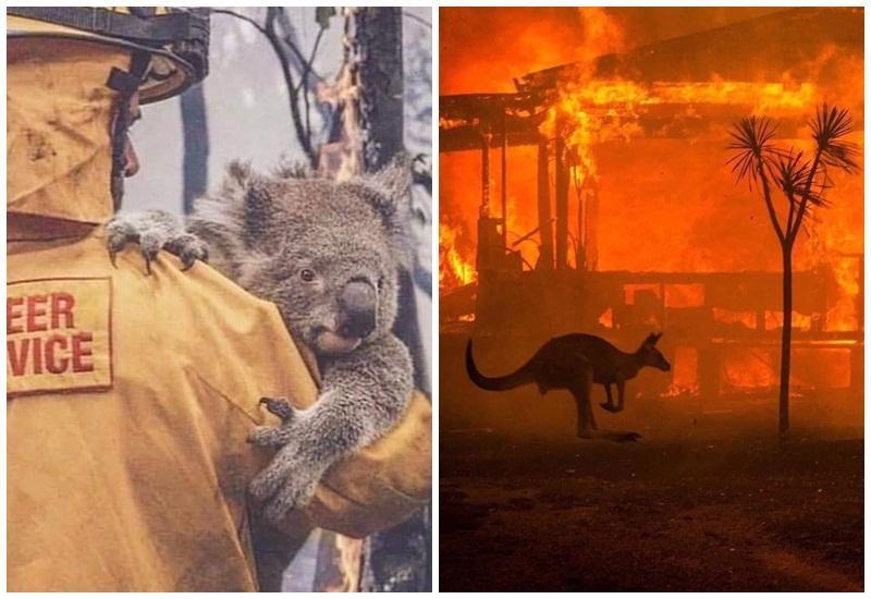Imagini APOCALIPTICE dar şi emoţionale în AUSTRALIA! Zeci de oameni decedați și milioane de animale moarte!