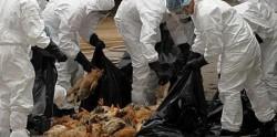 Măsuri speciale pentru prevenirea gripei aviare în Arad