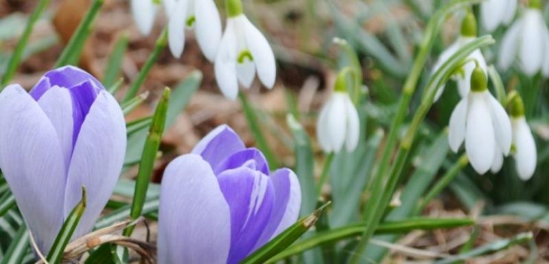 Sfârșit de februarie cu 19 grade la Arad. Cum va fi vremea pe 1 și 8 Martie