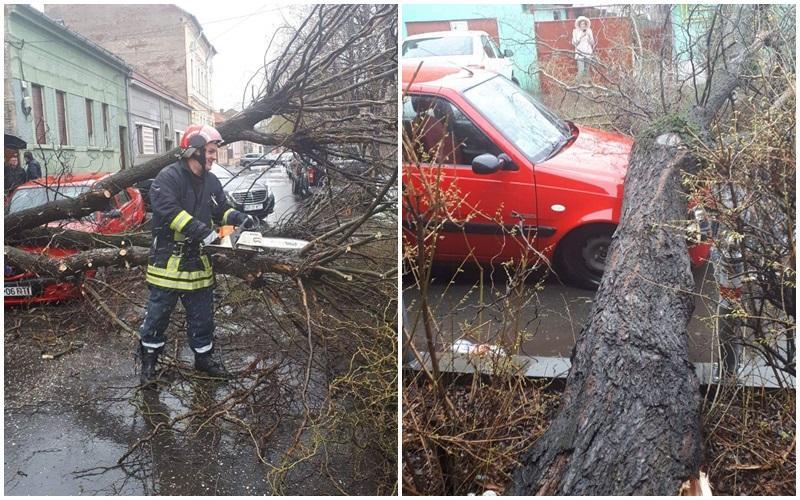 Copac prăbușit pe două autotursime pe strada Octavian Goga