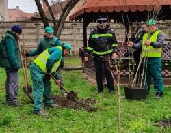GCA în colaborare cu ISU au demarat acţiuni de plantare de copaci în judeţul Arad
