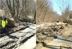 Ilegalităţi în zona Hălmăgel la regimul de exploatare şi depozitare a masei lemnoase